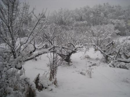 2012-03-10-雪2