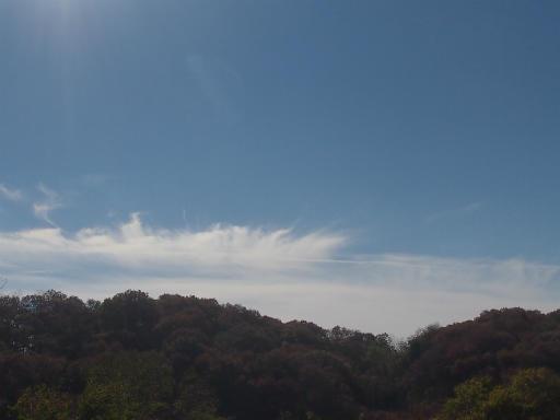 20131201・緑の森・初冬の空3