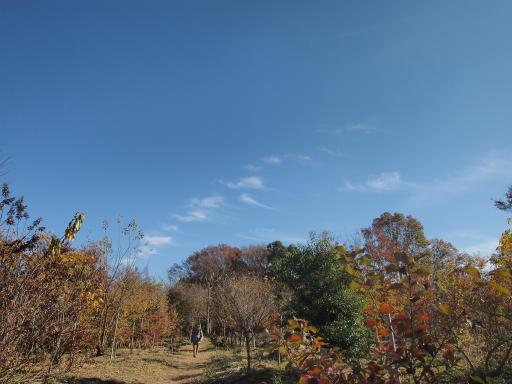 20131201・緑の森・初冬の空4
