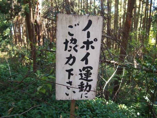 20131201・緑の森ネオン1