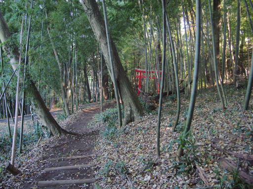 20131201・緑の森24