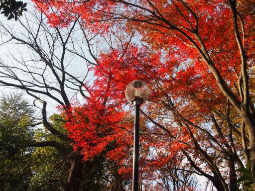 20131205・狭山湖06