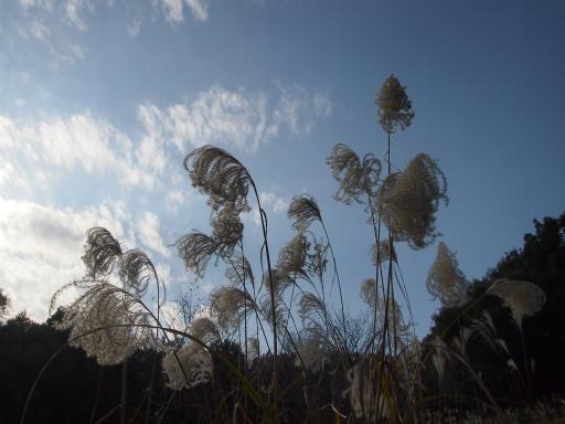 20131205・狭山湖11