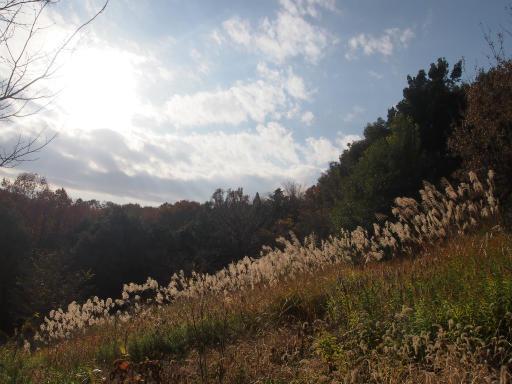 20131205・狭山湖10