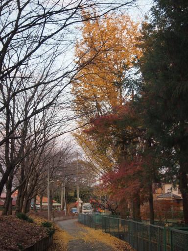 20131205・狭山湖24
