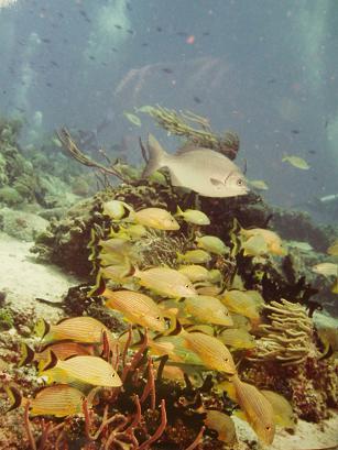 カリブの魚