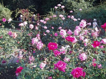 薔薇の庭園