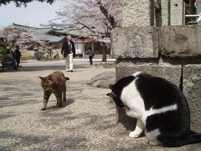猫ちゃん×2