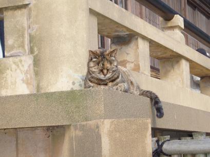 ふっくら猫