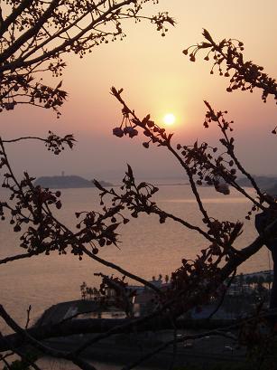 桜と夕日と江ノ島