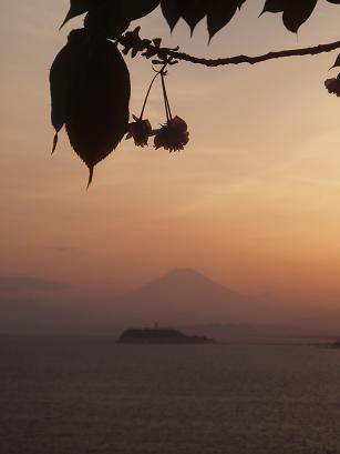 桜と富士山と夕焼け