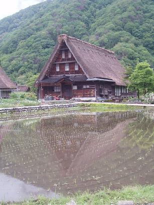 合掌造りの家と水田