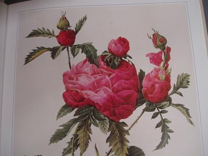二段咲きの薔薇