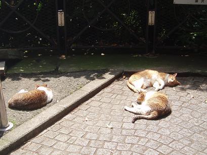 猫たちの昼寝