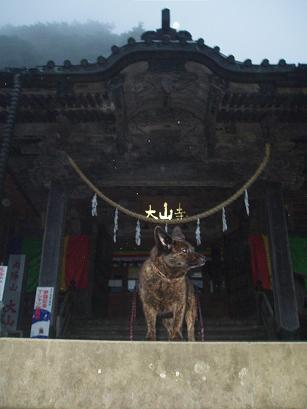 大山寺の狛犬