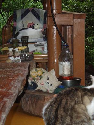 猫の喫茶店