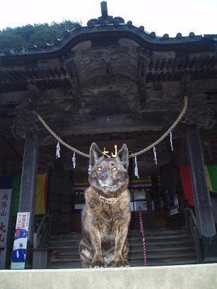 狛犬クロちゃん