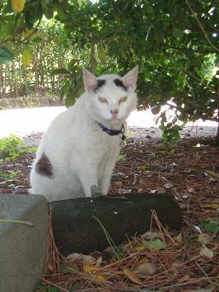 森戸神社の猫