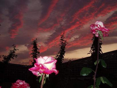 薔薇園の夕暮れ