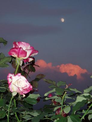 月と薔薇と夕焼け雲