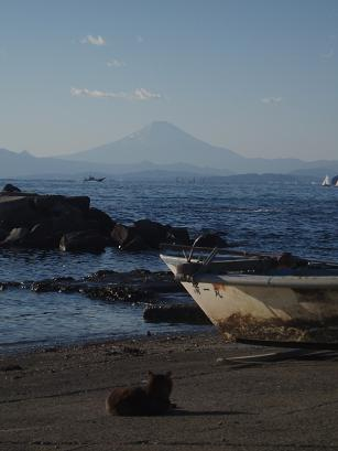猫と富士山