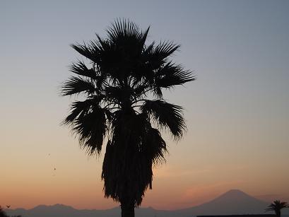 椰子と富士山