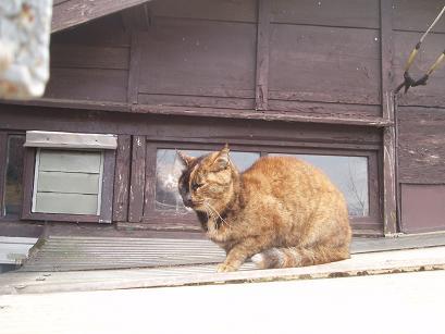 猫の心霊写真?