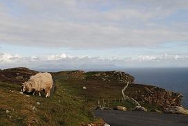 羊と大西洋