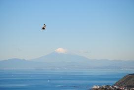 富士とトンビ