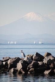 青サギと富士山