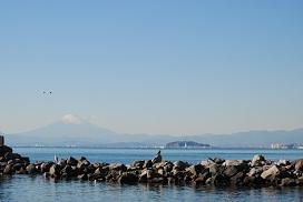 富士山とアオサギとトンビ