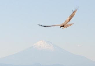 トンビと富士山