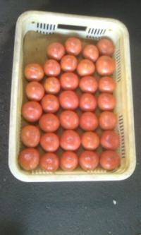 コンテナ入り塩トマト