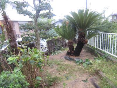 ジャングルなお庭が。。。