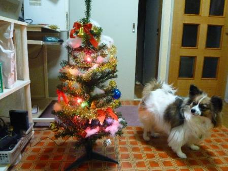 クリスマスツリー健[2]..