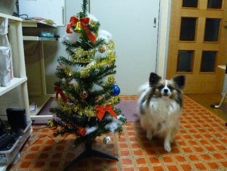 クリスマスツリー健[1]..