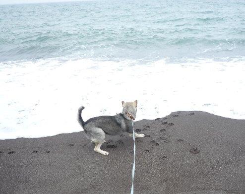 初めて見た海09年6月