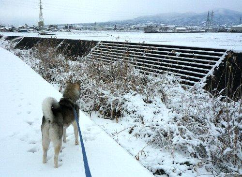 11年1月雪