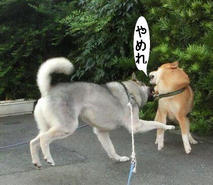 編集_1やめてー