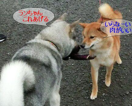 編集_1ランちゃんこれあげる