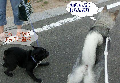 編集_1こらおやじ遊べ