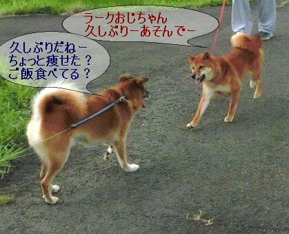 編集_1ラークアンドランちゃん