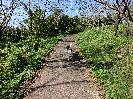 高原遊歩道