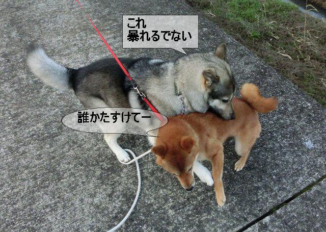 編集_ランちゃんとプロレス