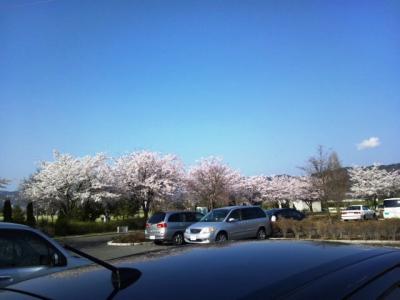 120424_あずみ野の桜