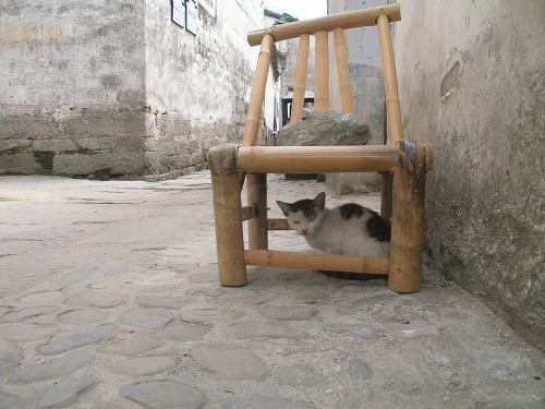07092218椅子に隠れる猫