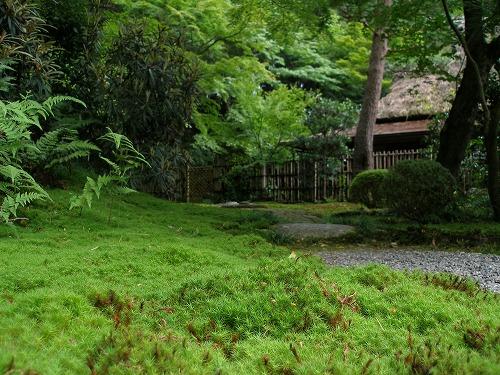 06071611苔の美しい庭園2
