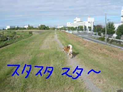 P1010605_convert_20110911093719.jpg