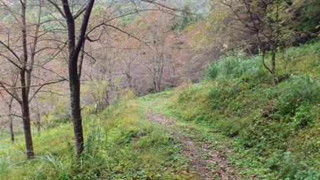 登山道(下り3)