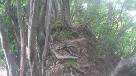 山頂付近(登り)